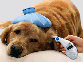 Basic Pet First Aid eBook