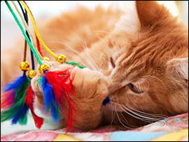 Pet and Animal Crafts