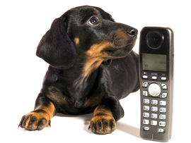 Pet Loss Hotlines