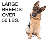 Large Dog to Human Age Calculator