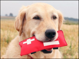 Pet Emergency Alert Kit